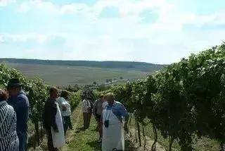 澳大利亚葡萄酒基础知识(一)
